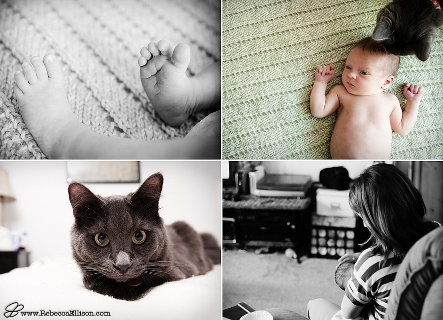 newborn and cat
