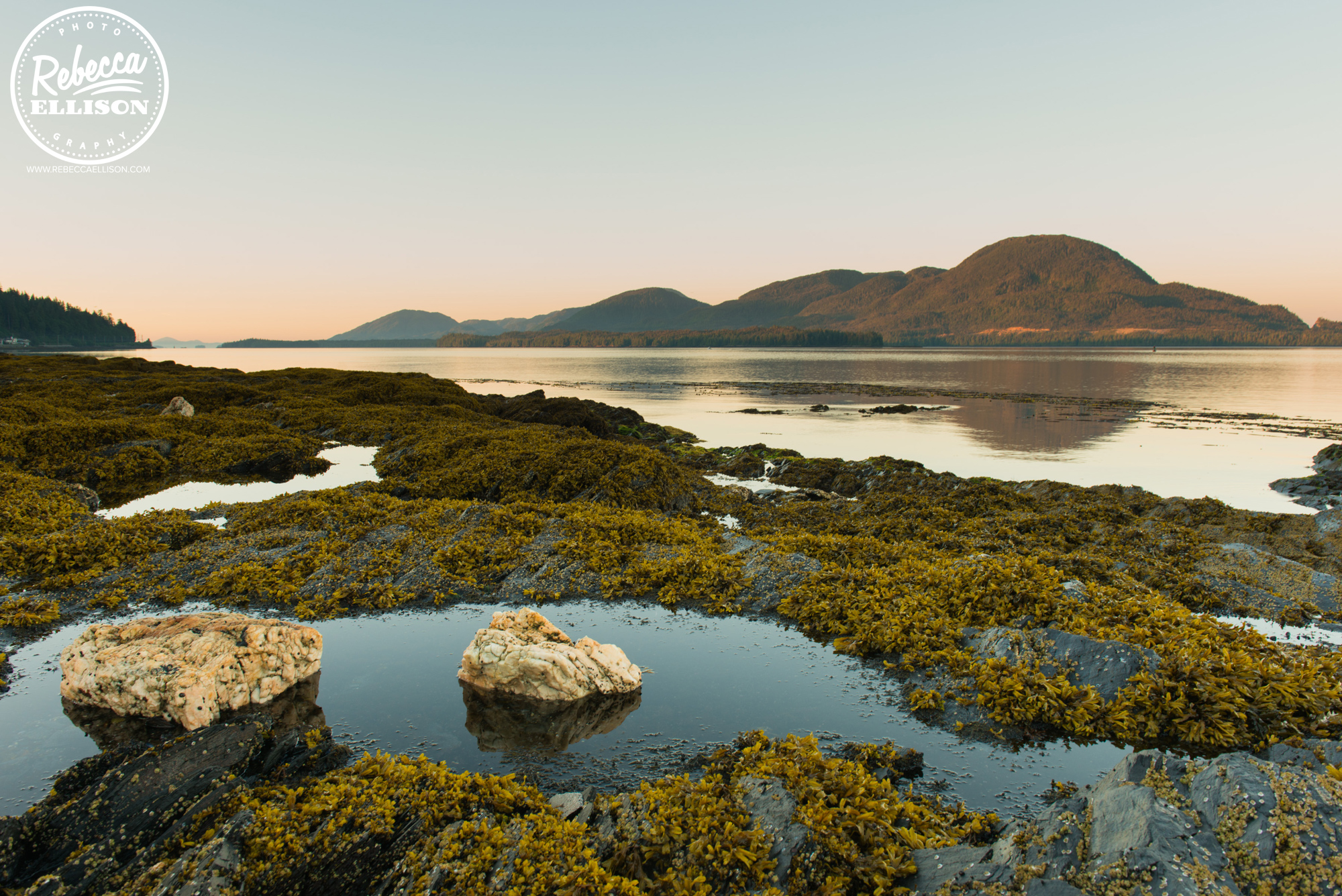 Tide pools at sunrise near Ketchikan Alaska photographed by Rebecca Ellison Photography
