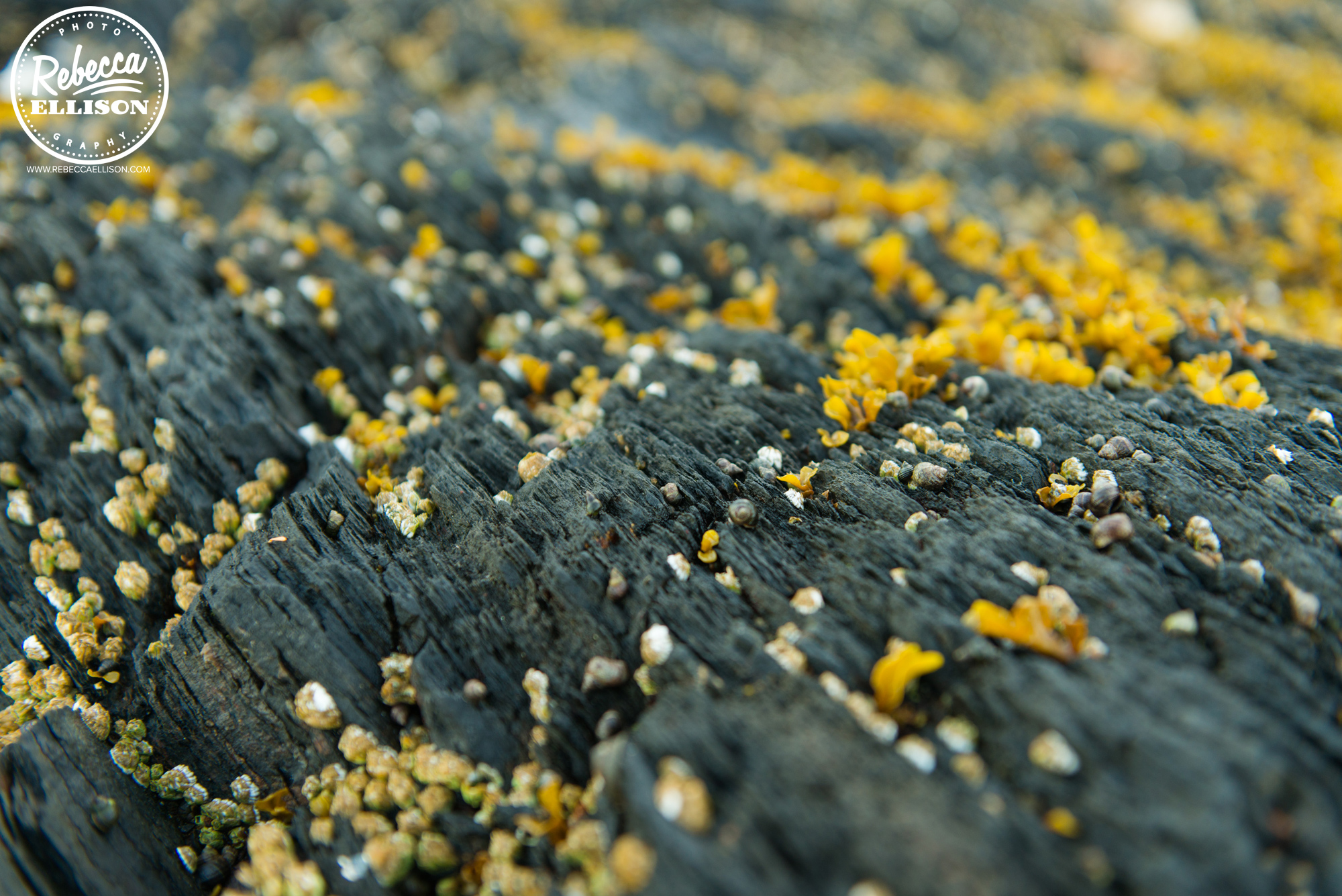 Lichen on rocks in Ketchikan Alaska photographed by Rebecca Ellison Photography