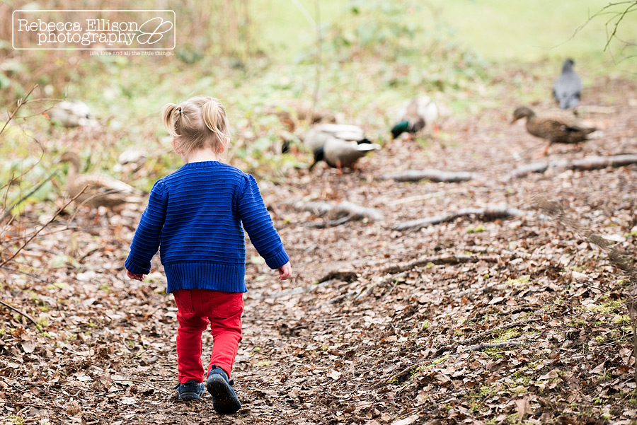 Toddler chases ducks at the park during 2 year old portraits photographed by Seattle toddler photographer Rebecca Ellison