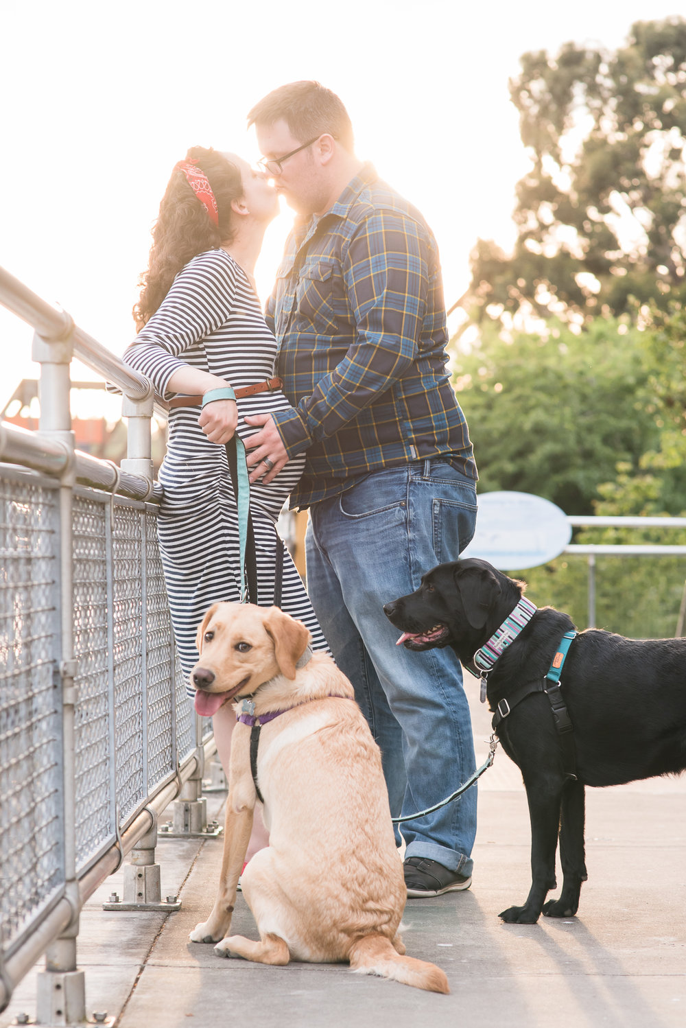 Maternity photos with dogs  at the Ballard Locks