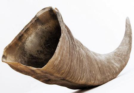 Image of Buffalo Horns from Dezeen