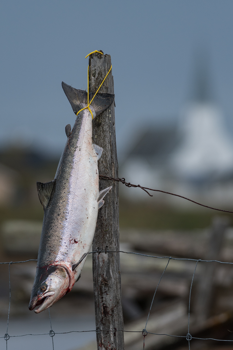 Next to birdwatching, salmon fishing is one of the most popular activities on Varanger.