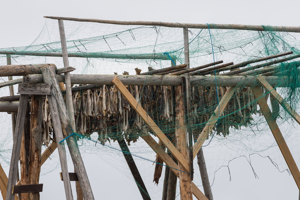 A fish drying rack on Ekkerøya.