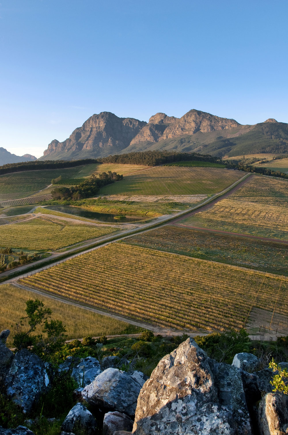 20.View of vineyards and Simonsberg as seen from the Babylonstoren hill.jpg