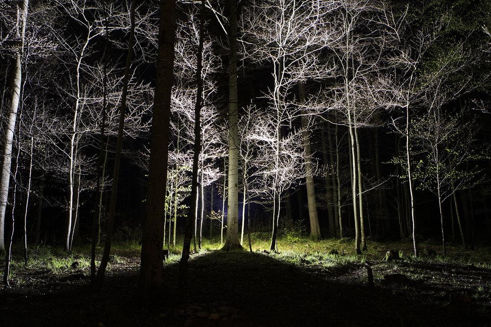 Black Forest test image, Erin Harper Vernon, 2017