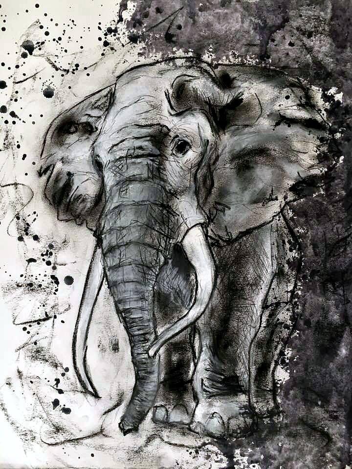 """Liberum Elephanti"""