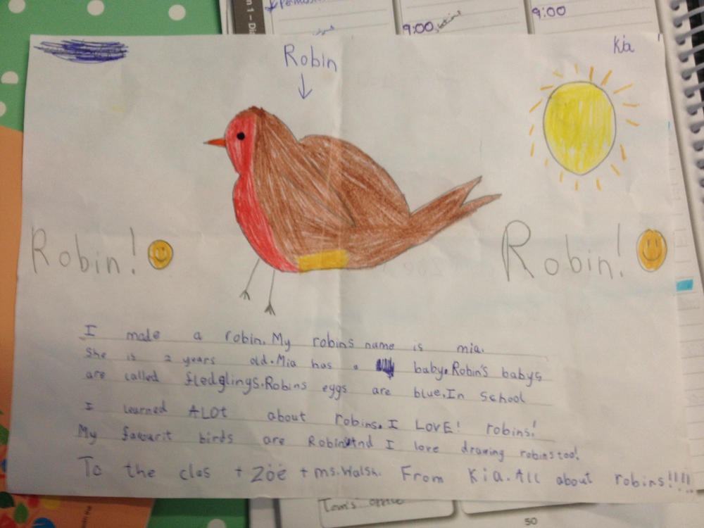 robins 3.jpg