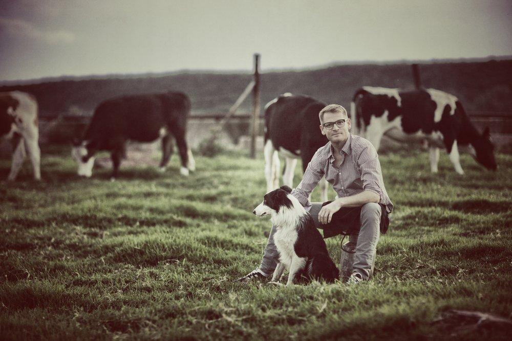 JH Cows.jpg