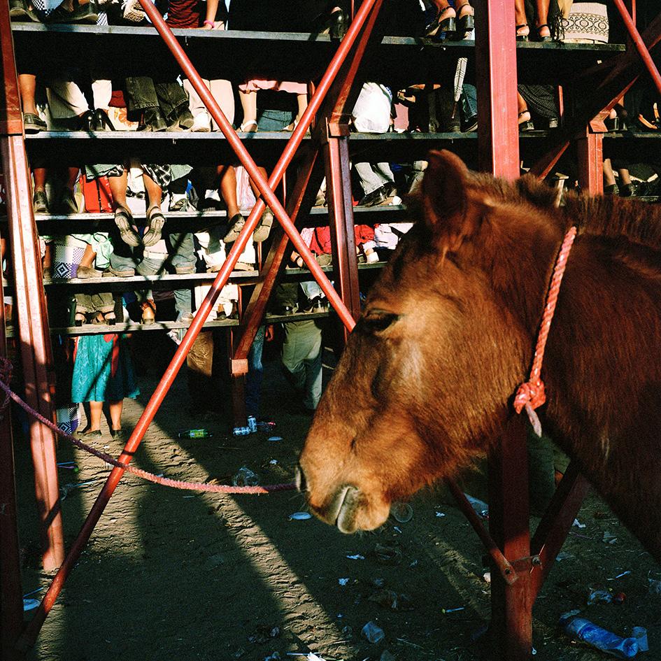 pferd.1.jpg