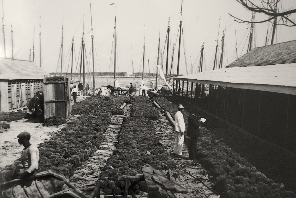 Art of the Month 'Sponge Yard' by Jacob F Coonley. Albumen print ca.1870-1920.