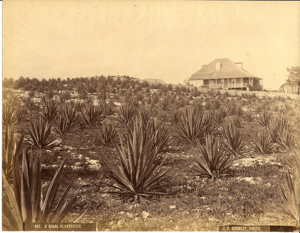 """A Sisal Plantation"" (ca. 1857-1904), Jacob Frank Coonley, albumen print, 7 x 8. Part of the National Collection, originally owned by R. Brent Malone."