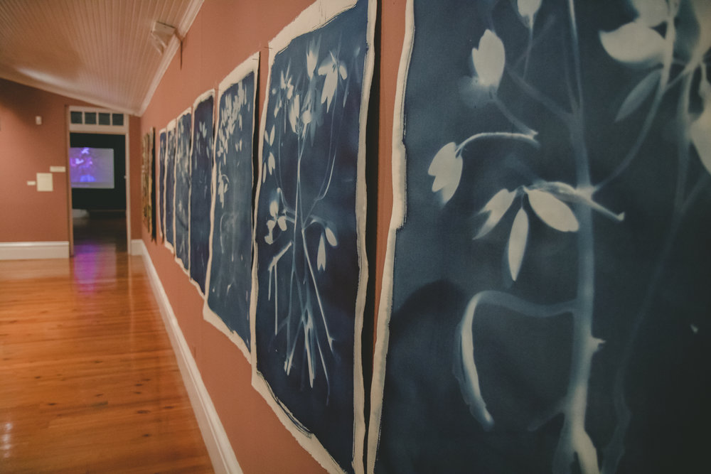 "From the ""Blue Carbon"" series, 2018. Natascha Vazquez. Cyanotype on paper, 29 1/2"" x 41 1/2"". Image courtesy of the artist."