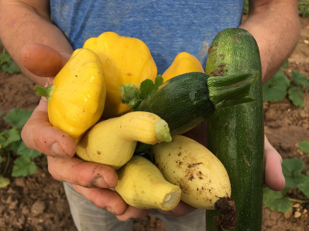 Nature's bounty, fresh vegetables picked from the farm of Neal Woody near Marshall, North Carolina. (Photo by Andrew Evans)