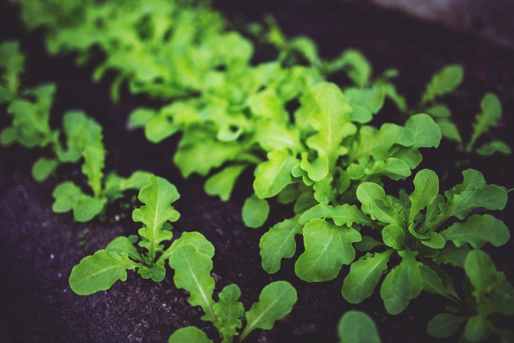 home gardening -