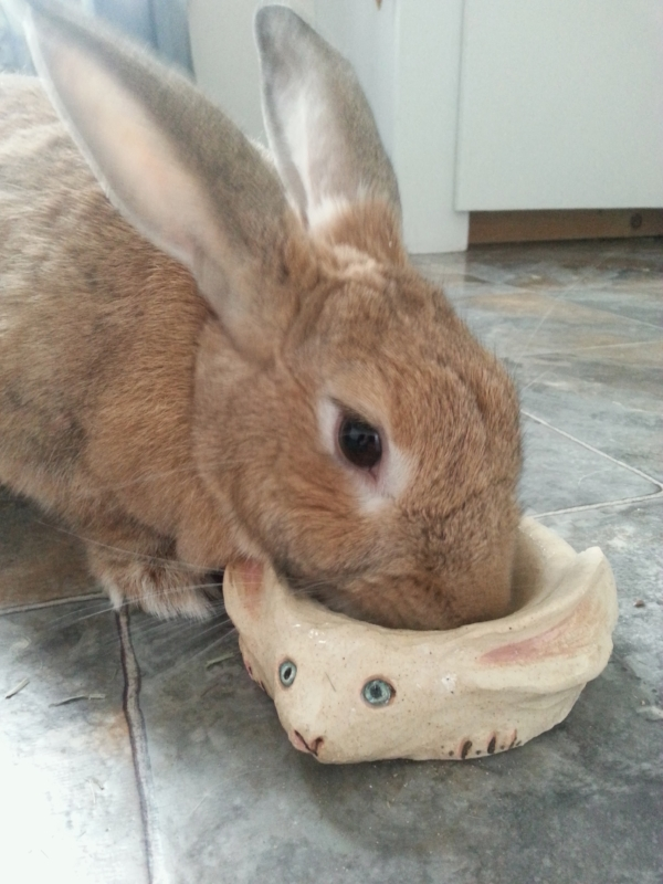 in 2014 I started making specially shaped food dishes designed so my girl couldn't throw them, as rabbits LOVE to do.