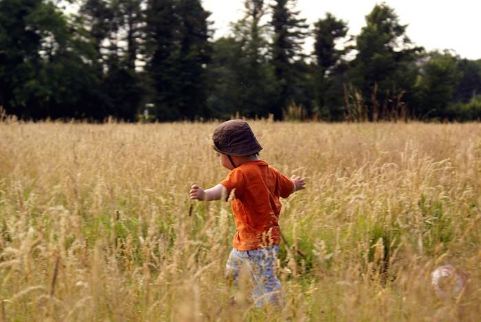 meadow-1348308-1278x855