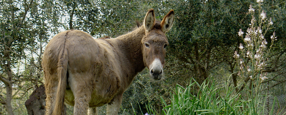 HAS GOD SENT A TALKING DONKEY YOUR WAY? IT COULD BE THE SYMPTOM OF A DEEPER PROBLEM.