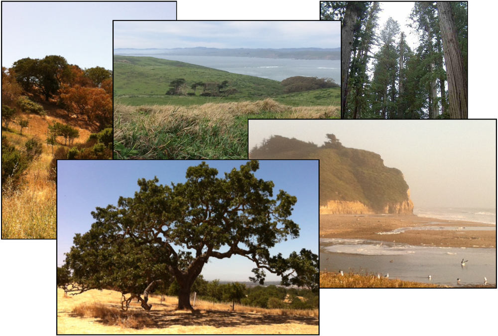 California images, inspiration for  The Last Shade Tree , novel by Margaret Panofsky