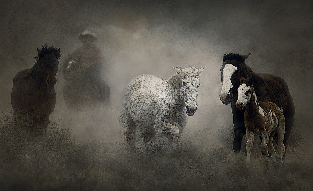 Wild Ones with Foal