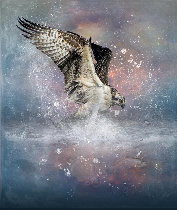 Osprey splash