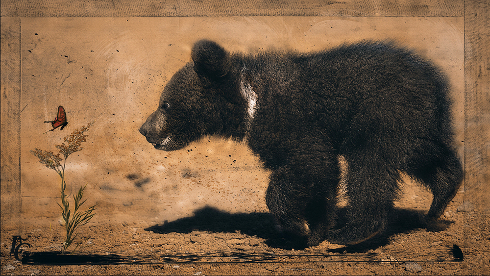 Grizzly and Butterfly