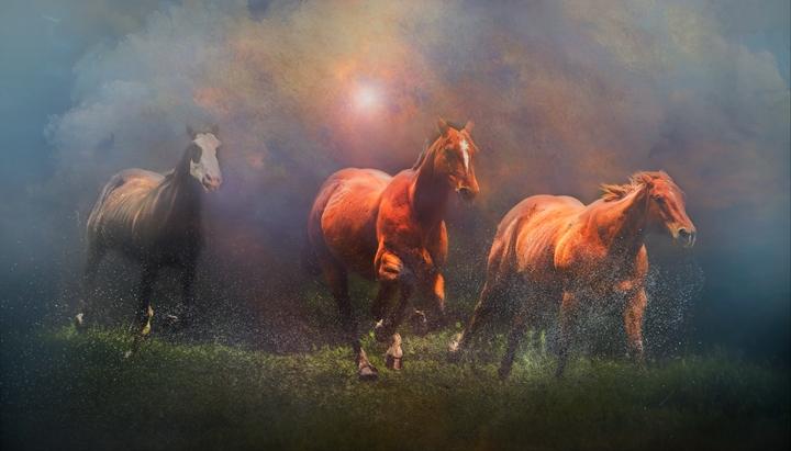 horserun fi2 copy.jpg