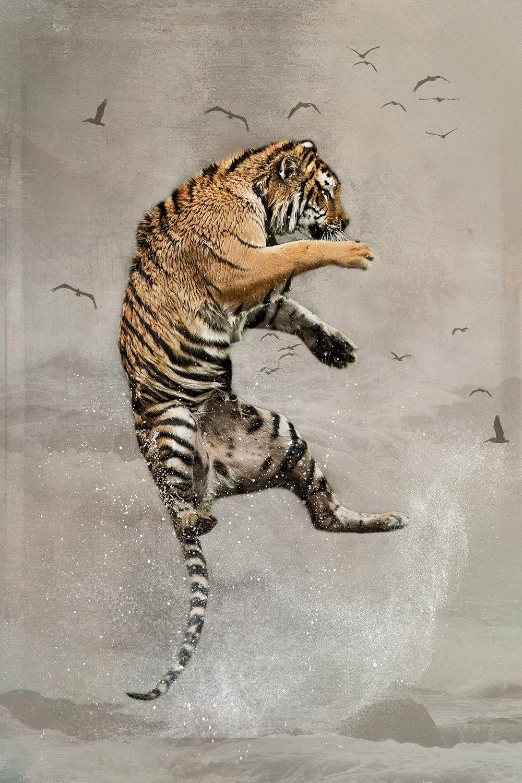 Siberian Tiger Leap 2