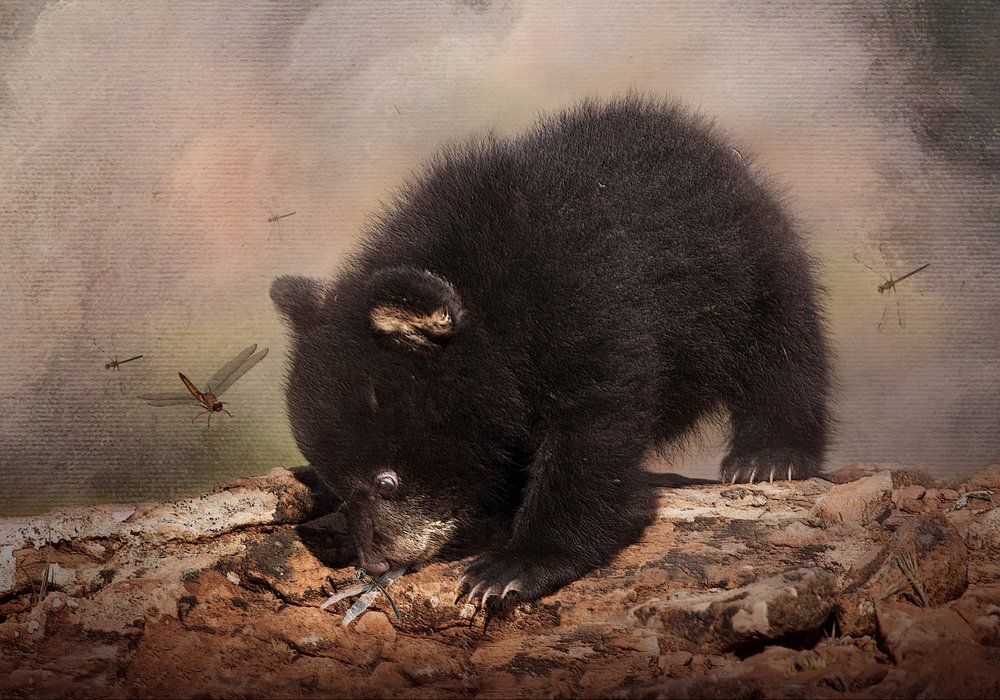 Black Bear Cub and Dragoflies