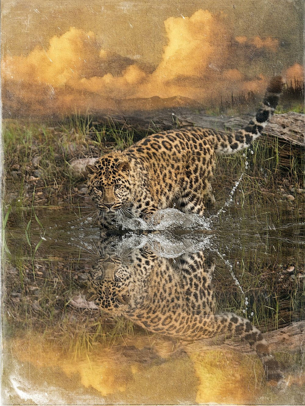 Amur Leopard Reflection