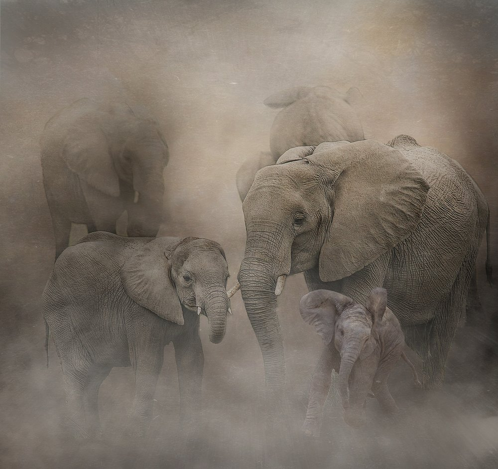 Elephants in Dust