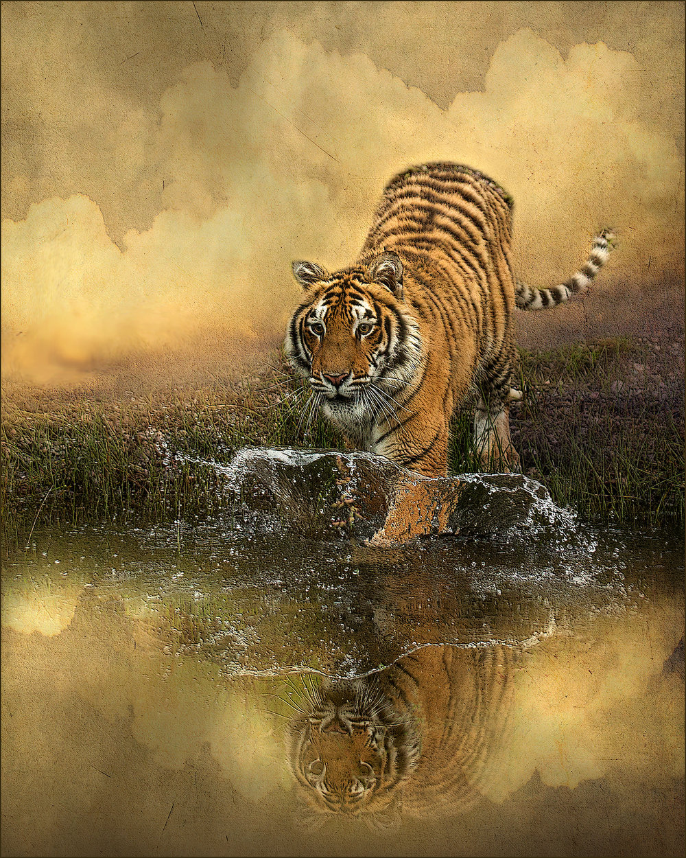 Tiger at Pond