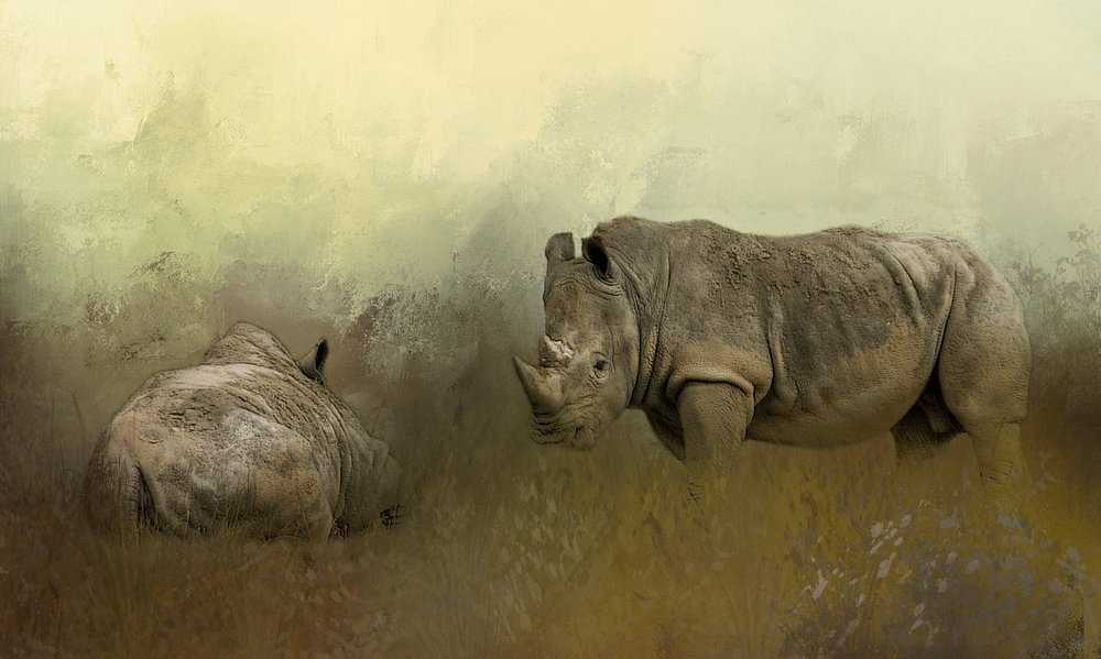 Rhinos at Rest