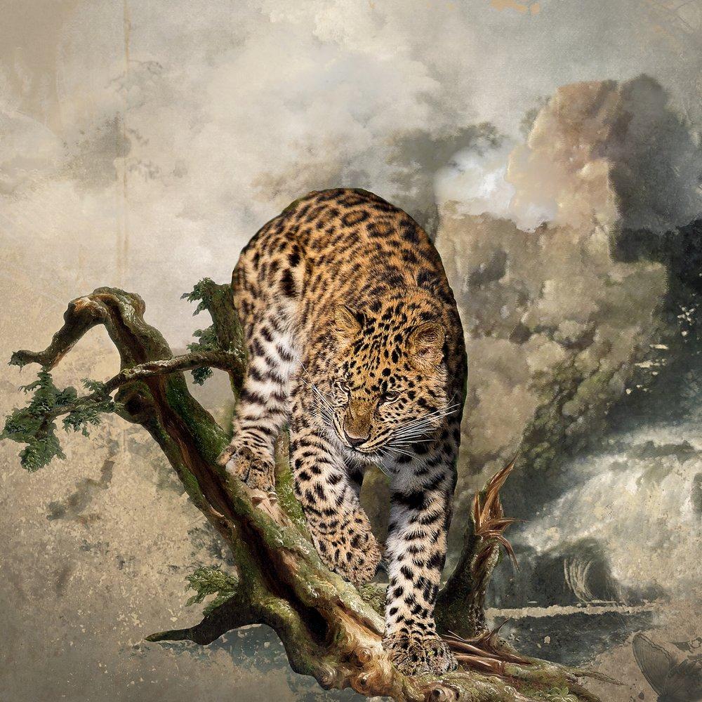 Amur Leopard on High Limb
