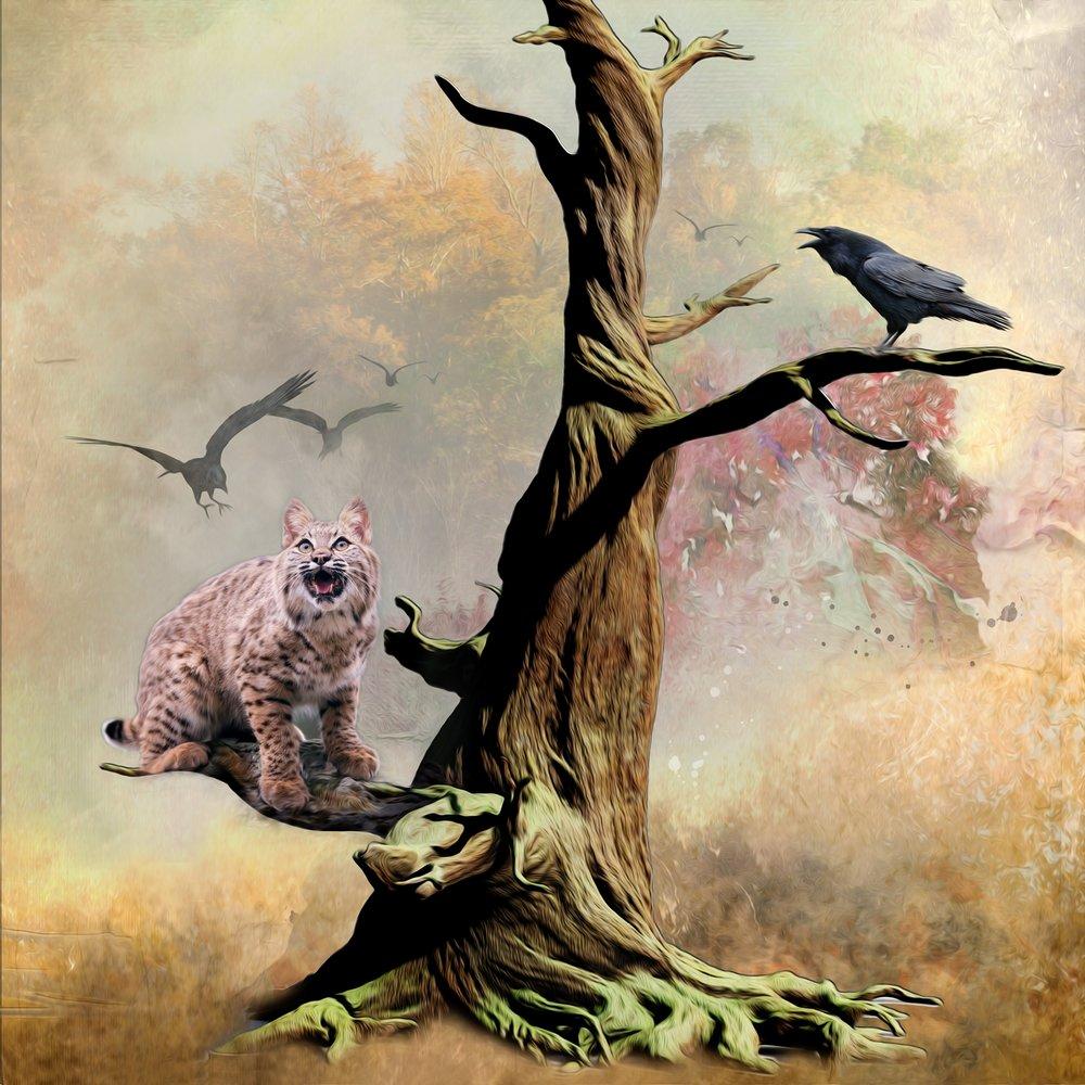 Raven Mobbing Bobcat 2