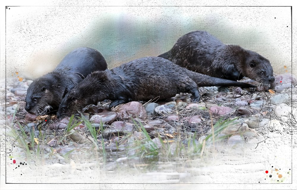 RiverOtters