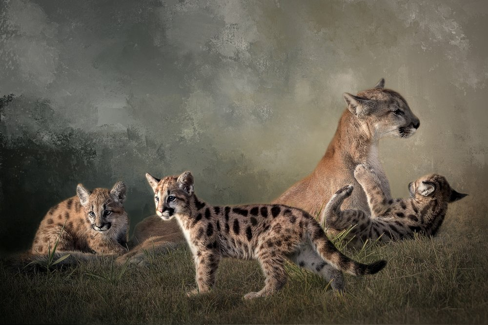 Cougar Family