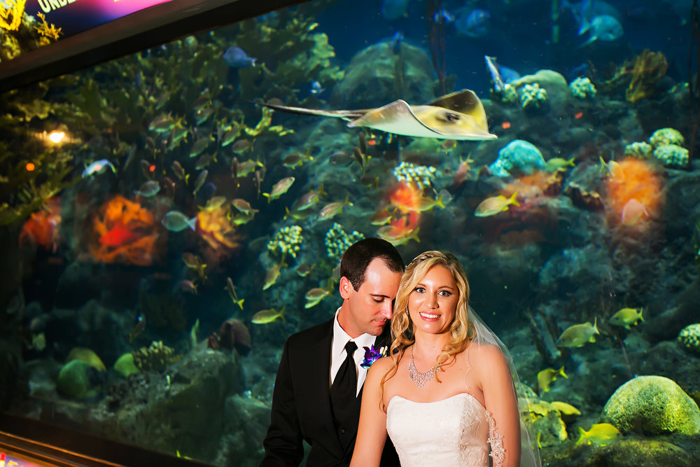limelight photography, aquarium wedding photography, florida aquarium, wedding photography, tampa, fl, florida, florida wedding photography, photography, tampa wedding photography, florida aquarium wedding photography, florida aquarium wedding