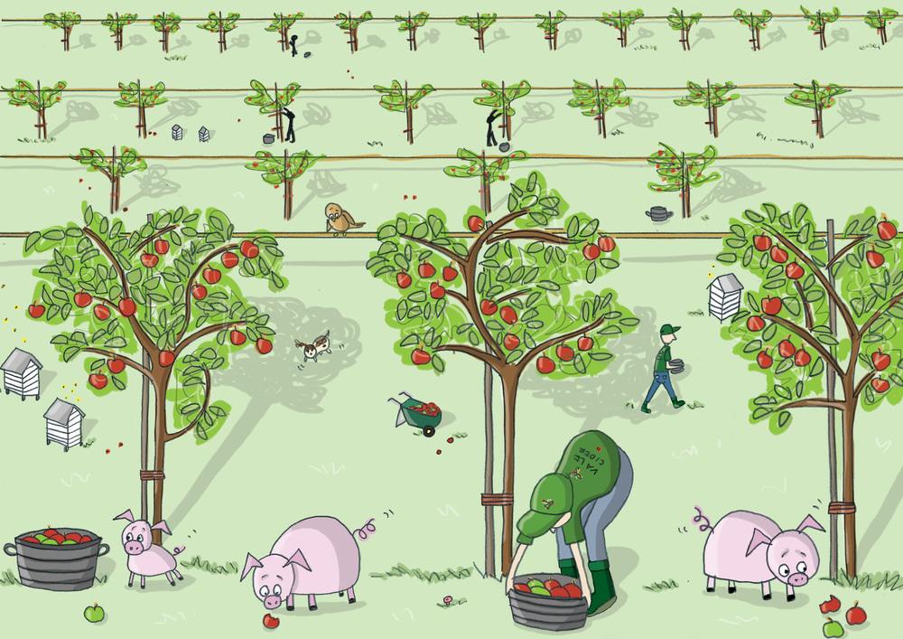 VC orchard RGB.jpg