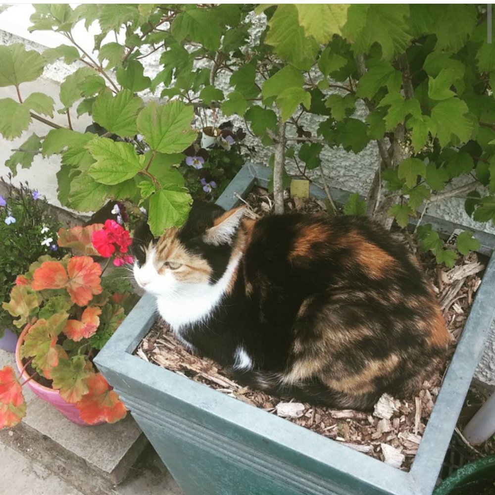 That's a plantpot. She loves them.