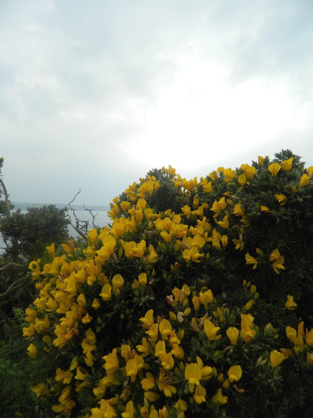 hedgerows.jpg