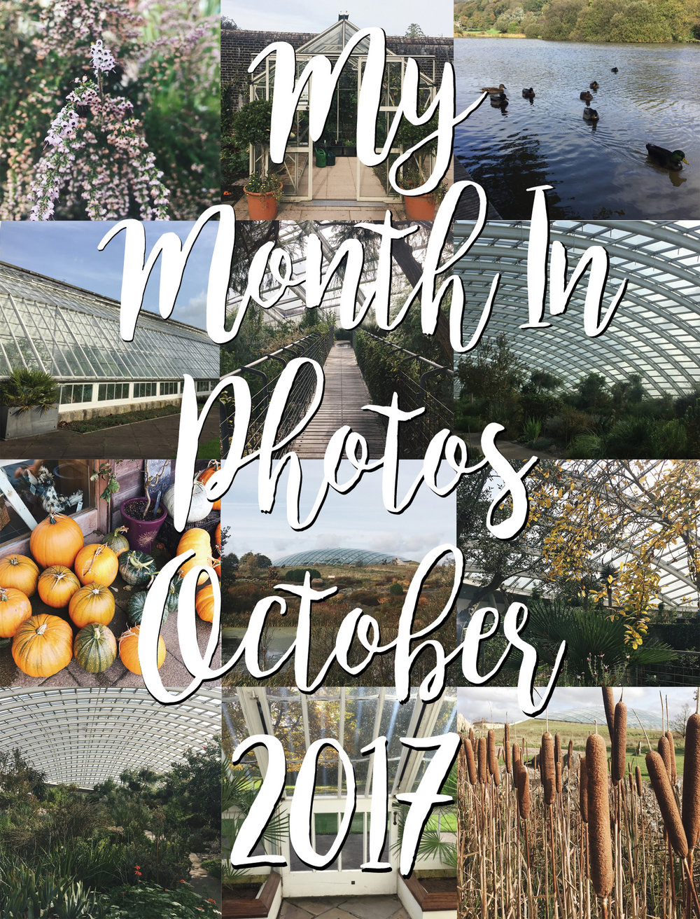 My Month In Photos - October 2017