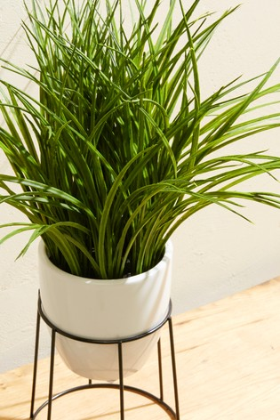 Grass Plant Stand - £18.00 from Next