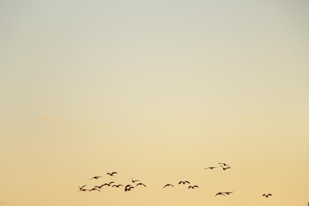 Birds in Point Pleasant Beach, NJ