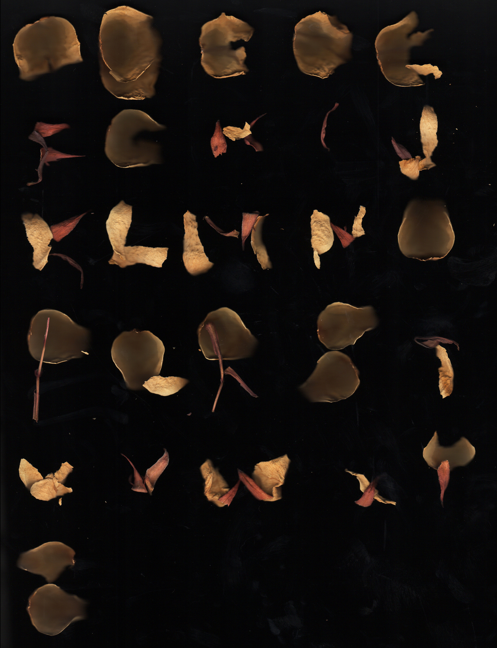 Scanned Dried Flower Petals