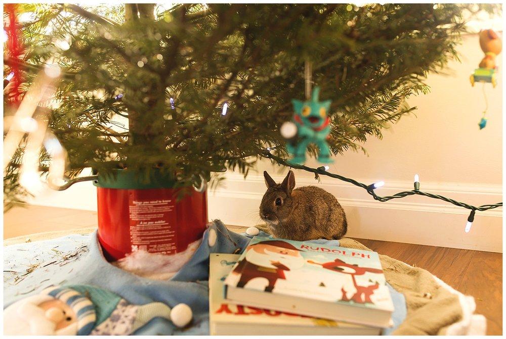 Christmas tree Bunny.jpg
