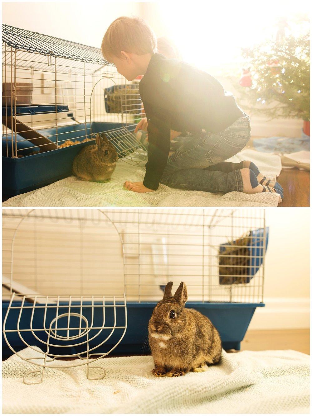 Pet Bunny.jpg