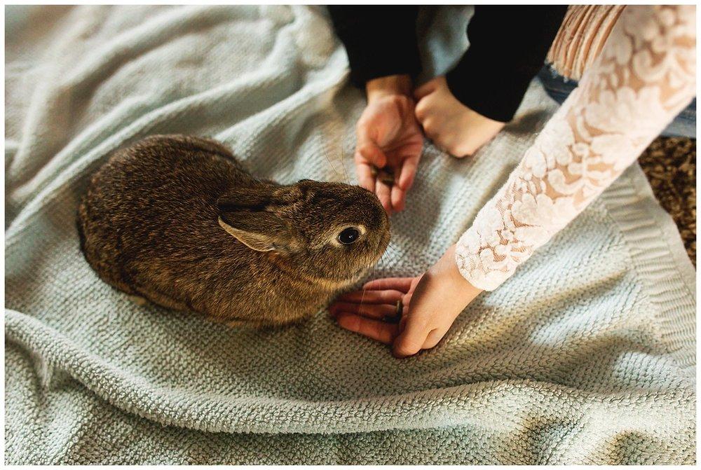 Dwarf Bunny love.jpg