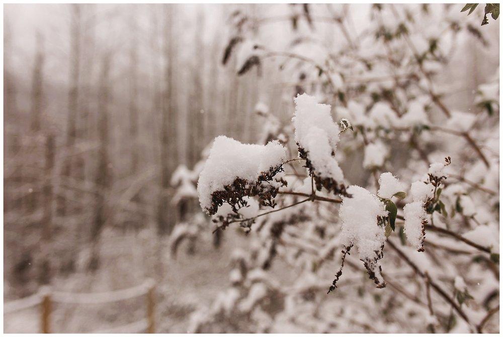 Snowy Plants.jpg