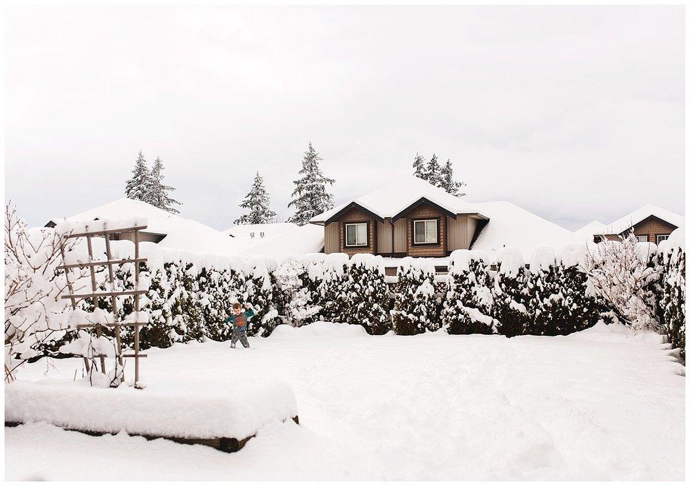 February snow fall.jpg
